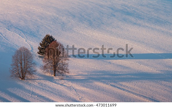 Three trees in the middle of field - Slovak Republic. Winter evening in the field. Three trees cast a shadow on a Snowy Evening field.
