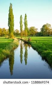 Three trees near a small river. They are located near the small village of Delden, in the region called Twente in the province of Overijssel, The Netherlands.