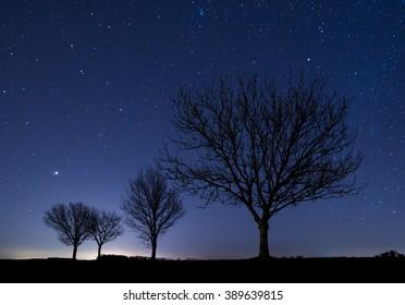 Three trees at night