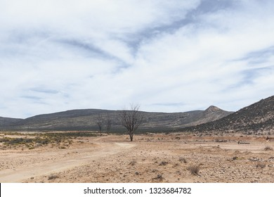 Three trees in the South African Savannah with hills in the background and cloudy sky