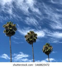 Three tropical palm trees against a blue cloudy sky