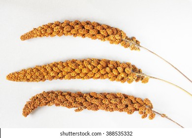 Three twig red millet on silver-gray background. Top view