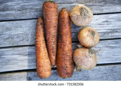 Three unwashed carrots and three onions. Grey wooden background. Daylight