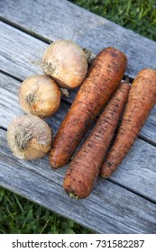 Three unwashed carrots and three onions on a wooden table. Green grass background. Daylight