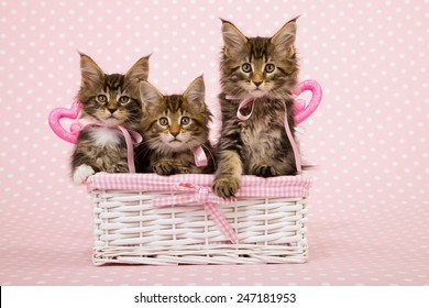 Three Valentine Maine Coon kittens sitting inside white basket with ornamental pink hearts on pink background