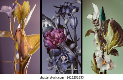 three vertical botanical compositions, different colors different plants, triptych, illustration.