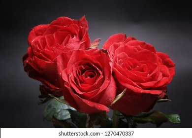 three very beautiful red rose flowers