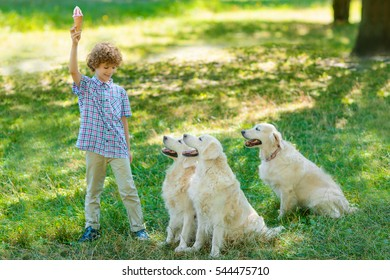 Three very hungry dogs sit in front of their master who stands with rised hand and holds an ice-cream. Little boy looks on his pets with sincere smile.