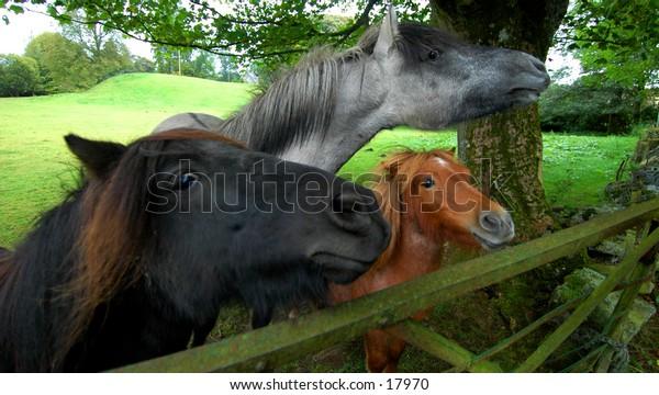 Three Very Hungry Horses