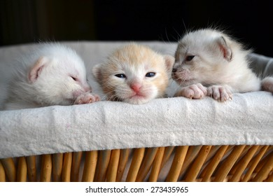 Three very small tiny kittens peeking out of a basket