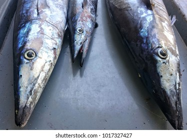 three wahoo fish after successful trolling trip