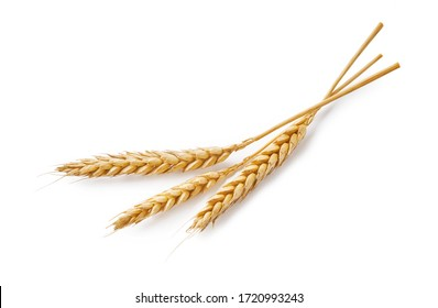Three wheat spikelets isolated on white background. Top view wheats.