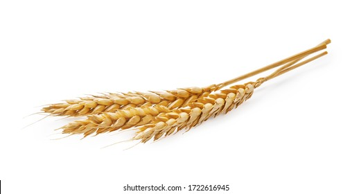 Three wheat spikelets isolated on white background - Shutterstock ID 1722616945