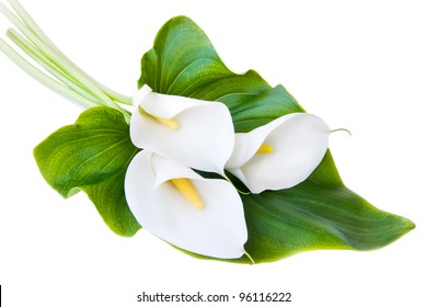 three white Calla lilies with leaf isolated on a white background