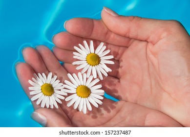 Three white daisies floating on the sky-blue water.