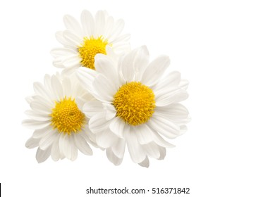 Three white flowers against white background