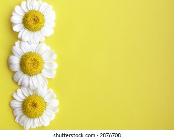 Three white flowers on yellow.Space for text!Ideal for design elements.