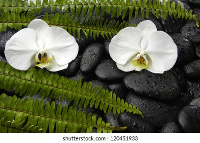 Three white orchid with green fern on zen stones