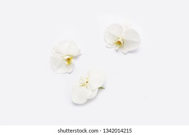 Three white orchid on white background