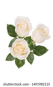 Three white roses on a white background. Isolated.