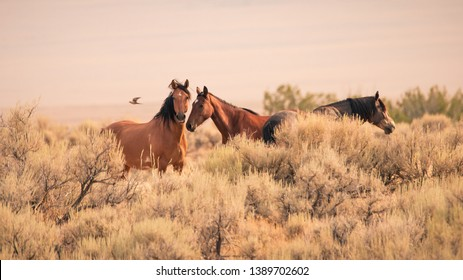 Three wild horses in the vast Utah desert in the western United States looking at the camera