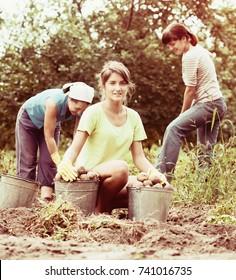three women harvesting potatoes in field