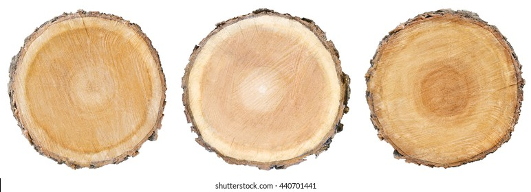 three wood slice cross section with tree rings that show age organic background isolated tree stump circle circles circular natural tree plant history