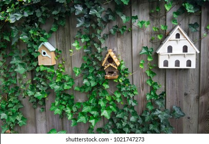 Three wooden birdhouses on a fence, covered with climbing green plant