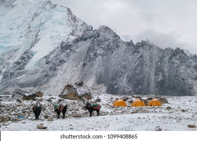 Three of yaks and Tents In Gorak Shep village