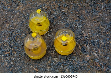 Three yellow pheromone fly traps on the ground, top view, outside