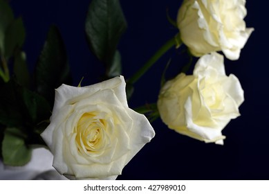Three yellow roses in a white watering can against a dark black background.
