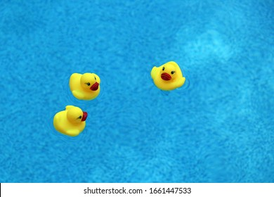 Three yellow rubber ducks floating in a blue swimming pool, overhead view, copy space.