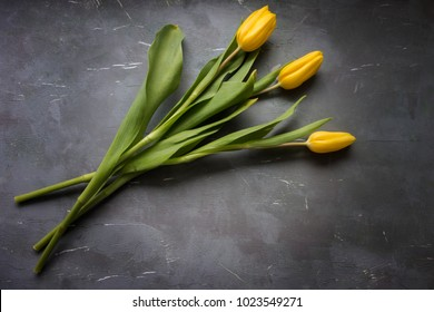 Three yellow tulips on a dark, grungy background.