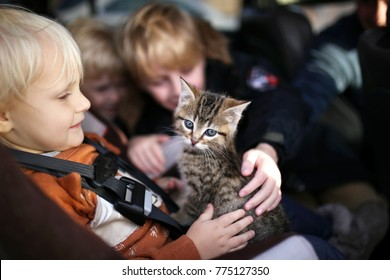 Three young children, including a toddler in a carseat, are petting their newly adopted baby kitten.