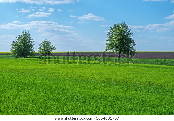 three-young-trees-green-leaves-600w-1854