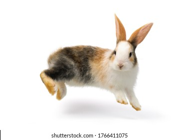 Three-colored rabbit baby jumping and playing isolated on white background,  with cliping