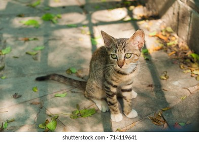 Three-colored street kitten Sitting on The ground staring back