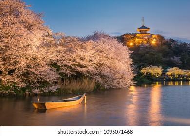 Three-Story Pagoda Of Former Tomyoji Temple and Sakura full bloom light up in Sankeien Garden