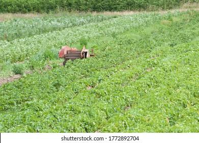 threshing machine and food crops growing ripe in field