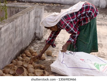 Thrissur, Kerala/India- January 28, 2019: An old worker woman in shirt and lungi collects dried coconut shells in a plastic bag