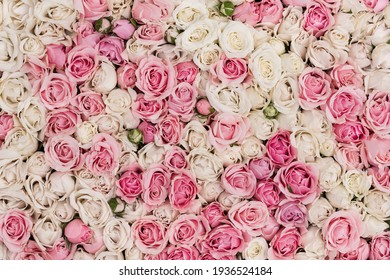 Thriving of full bloom flowerscape, floral visual of live flowers wall, beautiful roses background
