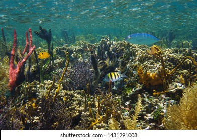 Thriving marine life in a coral reef underwater in the Caribbean sea, Belize