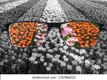Through glasses frame. Colorful view of tulips field in glasses and monochrome background. Different world perception. Optimism, hopefulness, mental health concept.