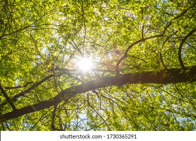 through the leaves of the tree shines a ray of sunshine.