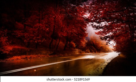 through the red forest