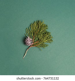 Thuja with christmas tree decoration on the green background. Minimal christmas concept.