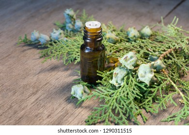 thuja essential oil container with thuja seeds on woden background