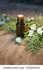 thuja essential oil container with thuja seeds on wooden background