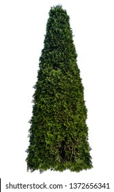 Thuja occidentalis, also known as northern white-cedar or eastern arborvitae, is an evergreen coniferous tree, in the cypress family Cupressaceae, which is native to eastern Canada.