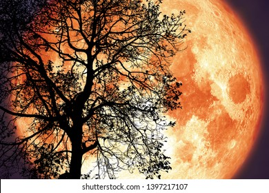 Thunder moon on night sky back over silhouette dark tree, Elements of this image furnished by NASA